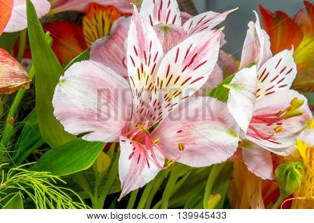 Garden Flowers On A Green Background Alstroemeria