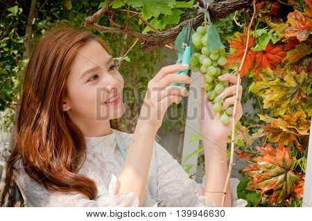 The Girls Were Cutting A Bunch Of Grapes , Green And Purple Grapes On A Bright Day.