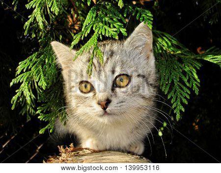 Portrait of gray kitten outside in the garden