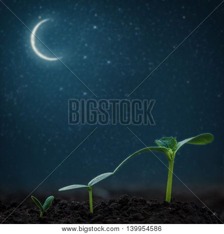 Green seedling growing on the backgrounds moon and stars. Elements of this image furnished by NASA