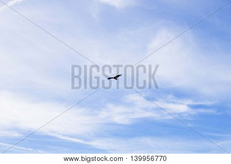 vulture flying free in a cloudy blue sky