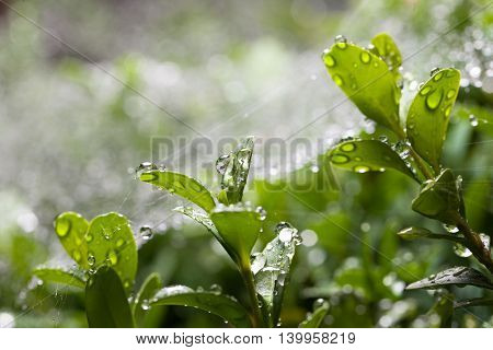 Rain And Boxtree