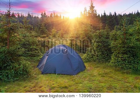 View of tent in forest at sunset or sunrise. Camping background. Camping and tent. Tourist tent in green pine forest with sunbeams at campsite. Camping in nature park in summer. Adventure travel active lifestyle freedom outdoors.