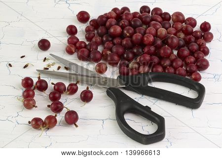 Gooseberries heap and scissors on white background