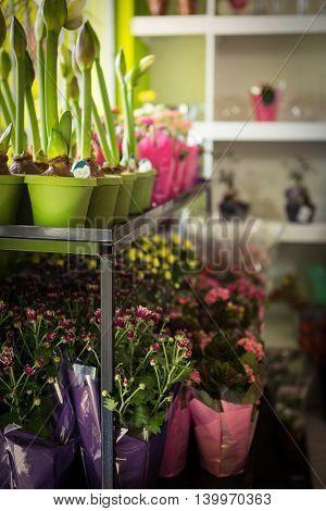 Plant pot arranged on flower shelf at flower shop