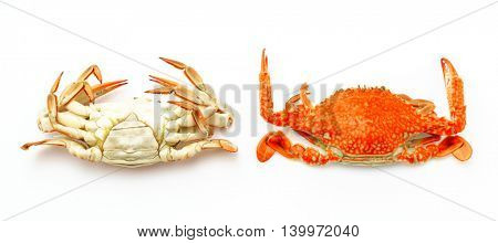 Steamed crabs on white background