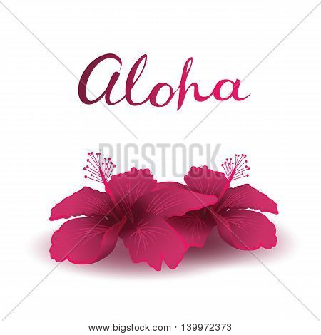 Aloha and Hibiscuses. Freehand lettering and two hibiscuses with transparent shadows. Design elements useful for any color background. Vector illustration.