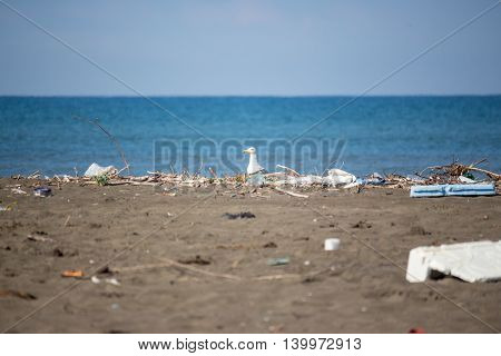 Seagull on a beach ecological disaster extinction of birds nature background.