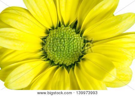 Isolated Yellow Flower Like A Daisy