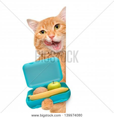 Cat with books and lunch box over white banner.