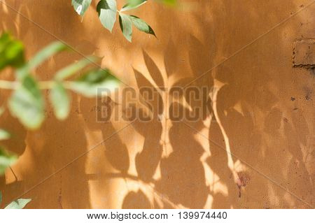 the shadow of the tree leaves on an iron wall