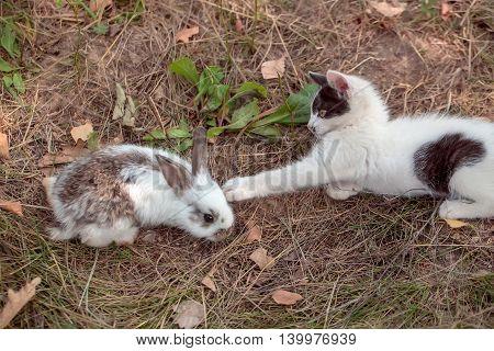 Cute Small Rabbit And Kitten