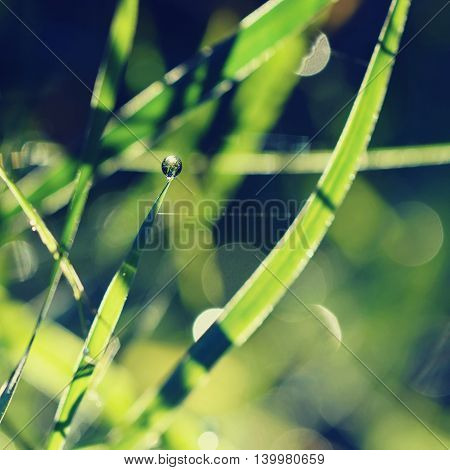 Dew On The Grass. Beautiful Natural Colored Background. Morning Time In Nature.