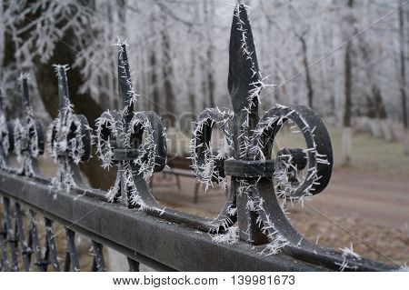 Cast iron grate in the park with Frost