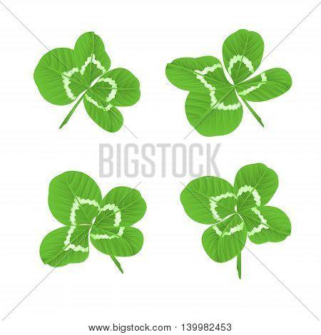 Leaf clovers symbol of good luck St. Patrick's day vector illustration