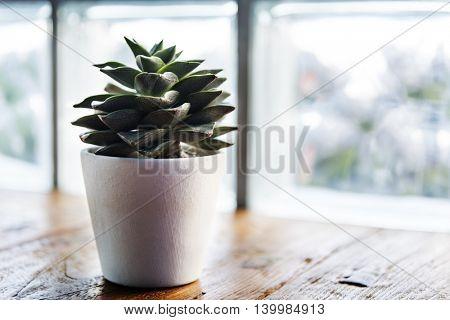 Botanic Growing Plant Relaxation Leisure Fresh Concept