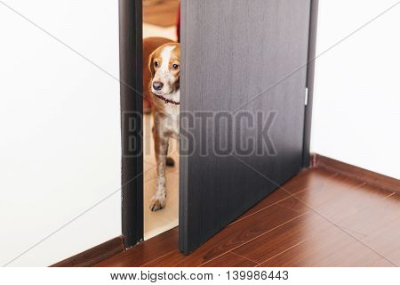 Closeup of a dog standing next to a door and looking away