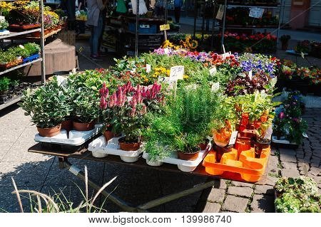 Variety of flowers for sale at a German outside flower market in Frankfurt Germany.