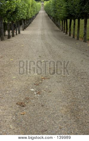 Tree Lined Gravel Track Leading To Garden, Chateau De Villandry, France