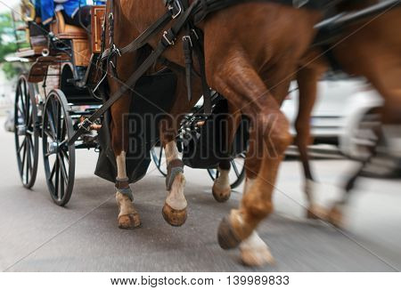 Horse-drawn carriage in a motion. Closeup view