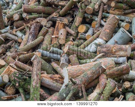 A pile of chopped wood for heating.
