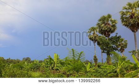 blue sky and white clouds framed by banana trees at bottom, tall sugar palms on the right of photo, Songkhla, Thailand