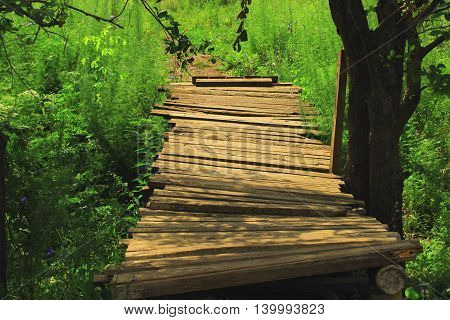 A small wooden bridge of planks roughly nailed to the runners held under the shade of the trees in the cool summer heat