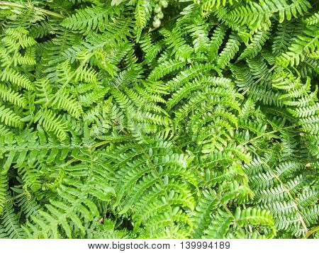 full frame background of green fern leaves