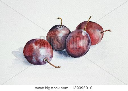 fresh plums - watercolor painting of fruits with paper texture