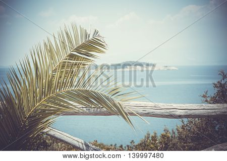 Palm Leaves And Island