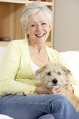 picture of beautiful senior woman  - Senior Woman Holding Dog On Sofa - JPG