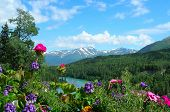 pic of beautiful flower  - A beautiful view of flowers in the foreground and a river and mountains in the background in Alaska - JPG