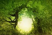 image of fantasy landscape  - Door to the fairy land - JPG