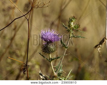 Unusual prickly wild flowers in the field