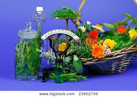 Herbs For Medicine Or Cooking