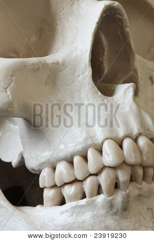 A Close Up Of A Human Skull