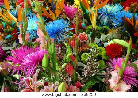 Mixed Multicolored Flowers
