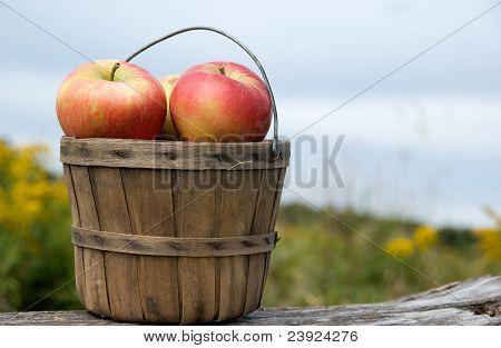 apples in bushel basket