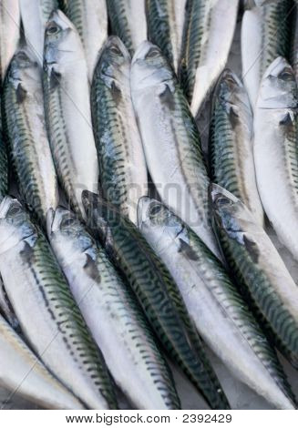 Common Mackerel Fishes At The Local Market