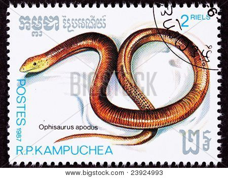 Canceled Cambodian Postage Stamp Sheltopusik, European Legless Lizard, Ophisaurus Apodus