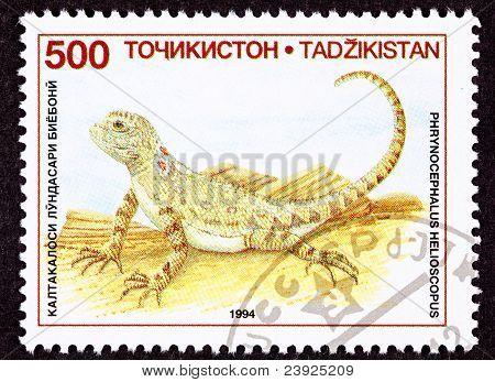 Canceled Tajikistan Postage Stamp Sunwatcher Toadhead Agama, Lizard, Phrynocephalus Helioscopus