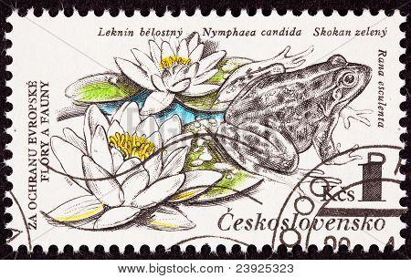 Czechselovakian estampilla rana comestible, Pelophylax Esculentus, lirio, Nymphaea Candida