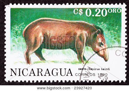 Canceled Nicaraguan Postage Stamp Side View Standing Tapir, Tapirus Bairdi