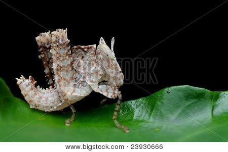 weird grasshopper