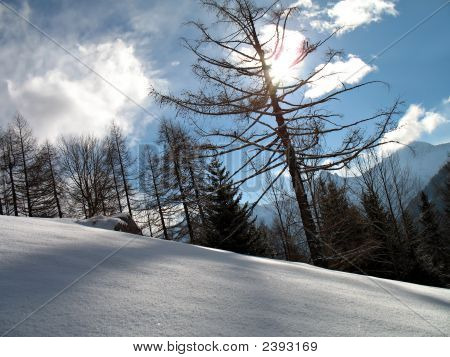 Backlight Snowy Forest