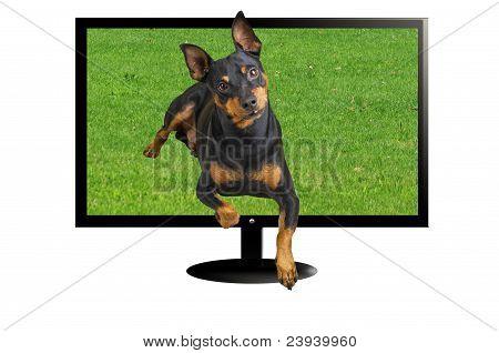 dog in three dimension
