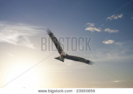 Freedom Flying Threw Our Wings