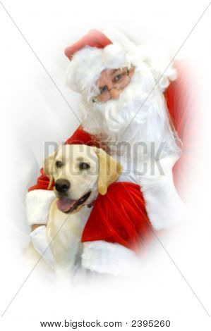 Canine And Clause