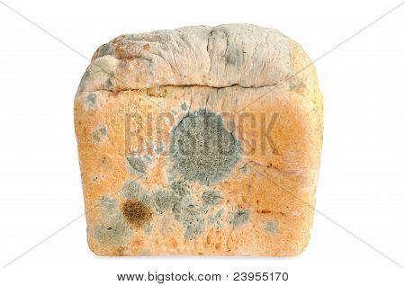 Moldy bread. Isolated