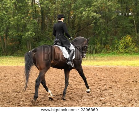 Dressage Competition